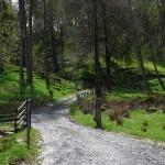 gwrdu road