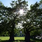 trinity trees small