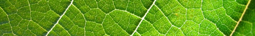 cropped-Grapevine_leaf.jpg